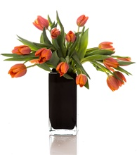 Gorgeous Fresh Cut Tulips