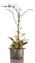 Orchid Plant Arrangement